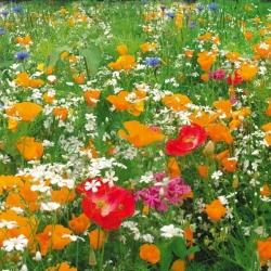 Цветы неприхотливые многолетние
