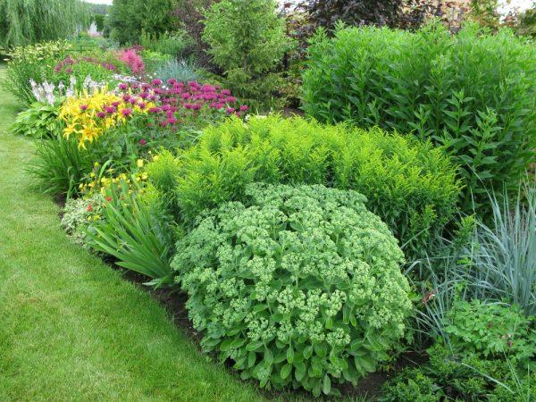 Востребованность многолетников для садов
