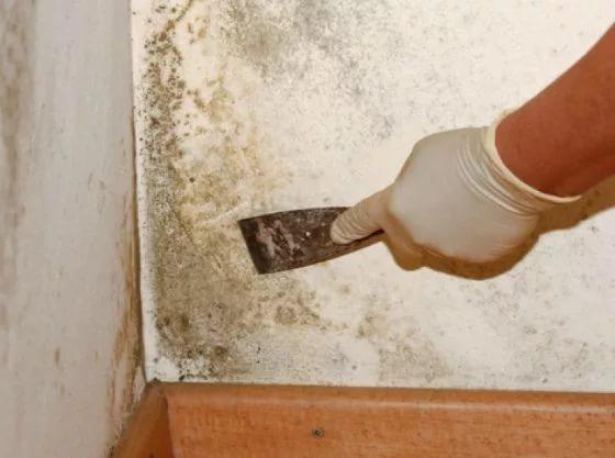 Как эффективно бороться с грибками и плесенью