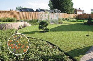 Сад с газоном - божественное чудо