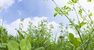 лекарственные-растения-леса
