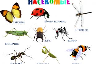 Вам надоели насекомые и грызуны?