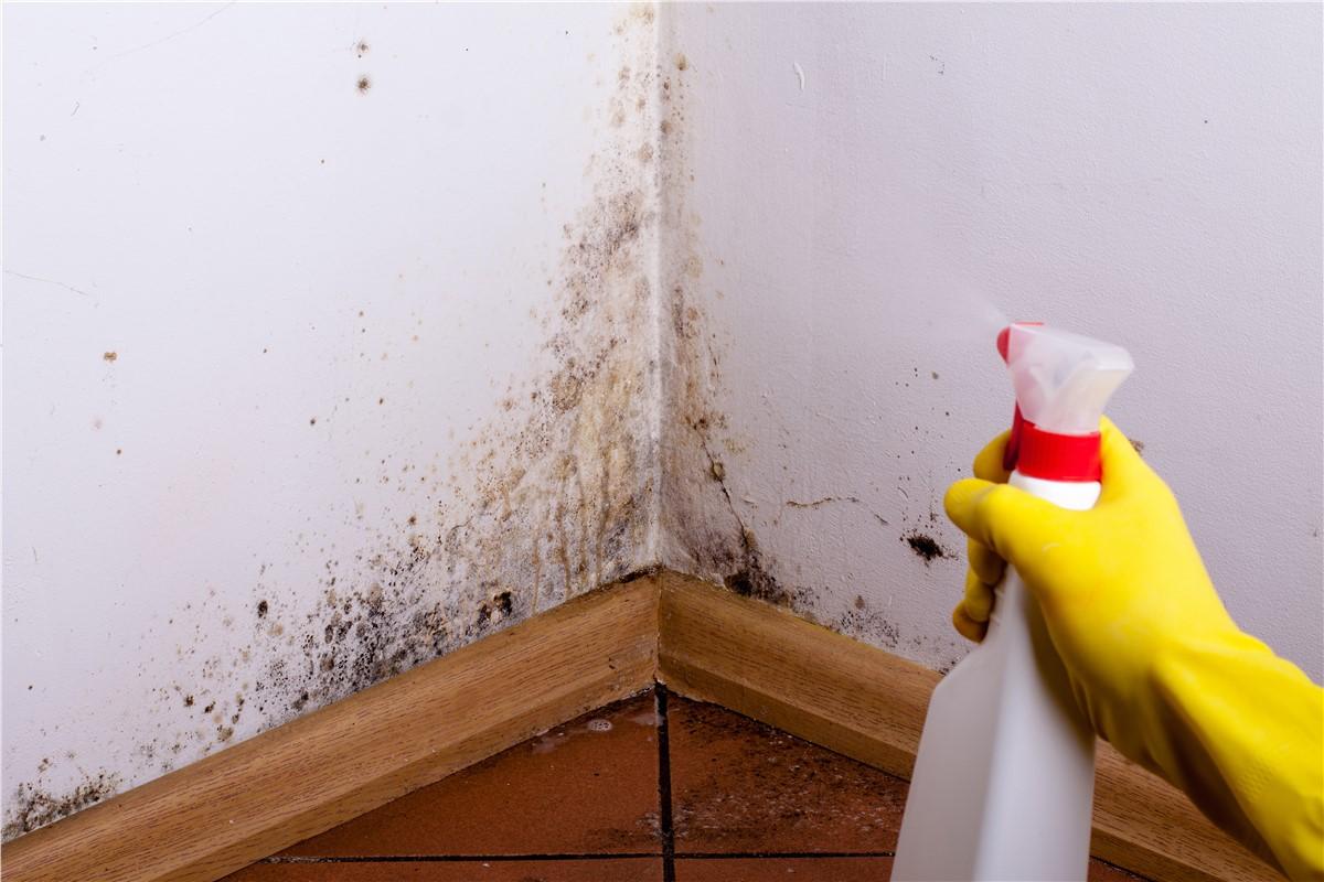 Дезинфекция помещения, уничтожение блох, насекомых, грызунов. Как избавиться от неприятного запаха?