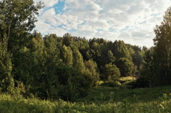 Земельные участки у леса
