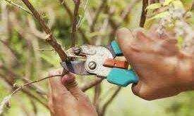 Способы обрезки деревьев