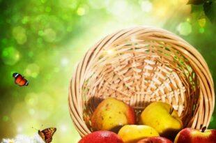 Купить яблоки с доставкой на дом в СПб онлайн